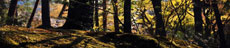 Bosgrond