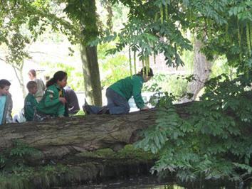 Welpen klauteren in bos